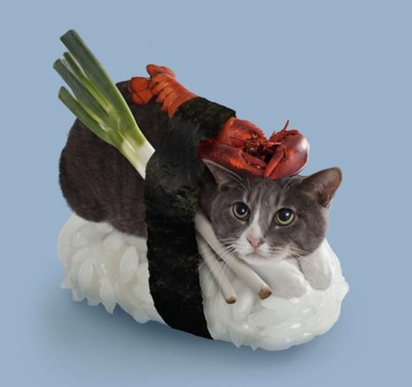 katzen sushi neko sushi