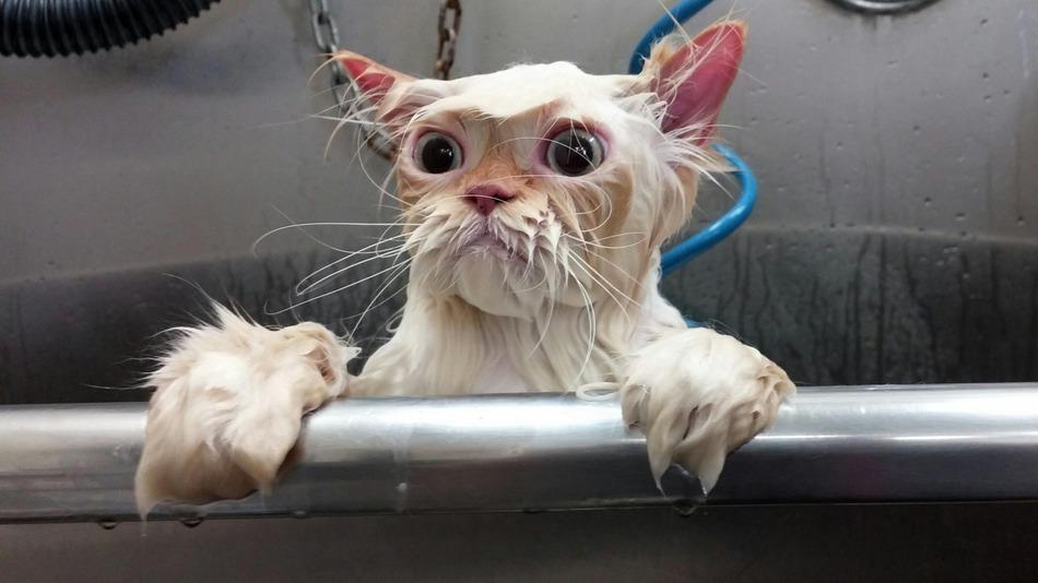 katze in der badewanne photoshop-challenge