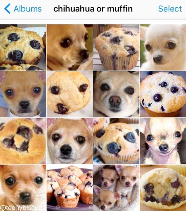 chihuahua oder muffin karen zack bild auf instagram