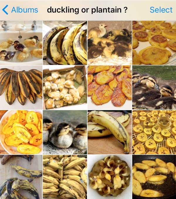 ente oder banane karen zack bild auf instagram