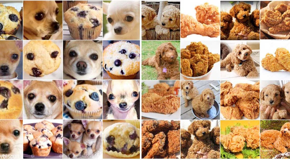chihuahua oder muffin twitter