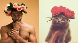 sexy Katzen Slider