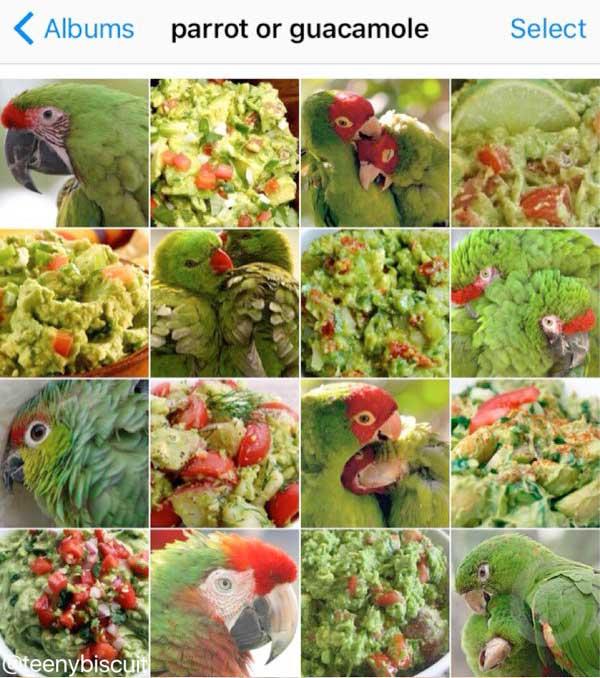 papagei oder guacamole karen zack bild auf instagram