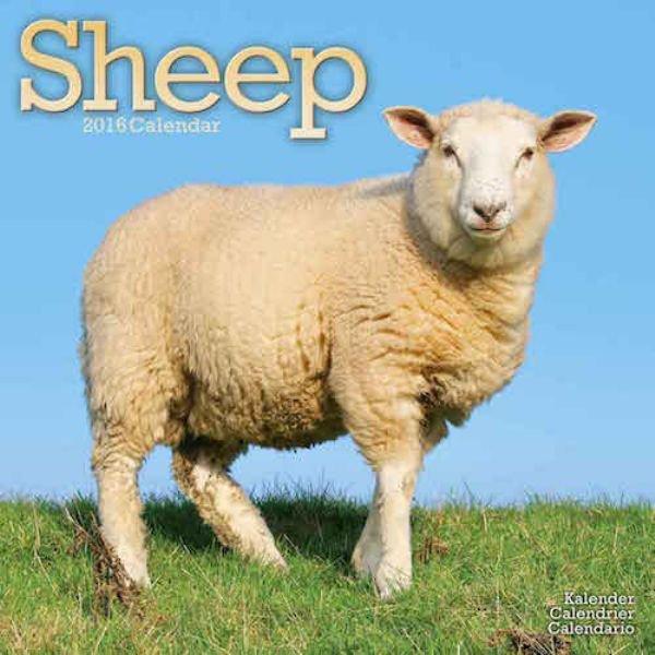 Seltsame Kalender sheeps 2016