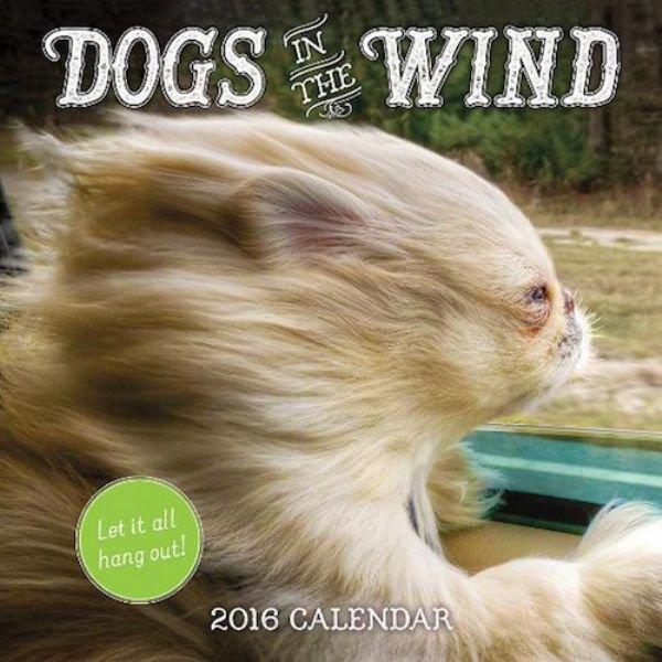 weirdest-2016-calendars-for-your-wall-22-photos-5