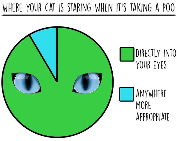 Alex Finnis / BuzzFeed statistiken über katzen lustig