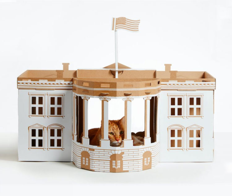 poopy cat weisses haus