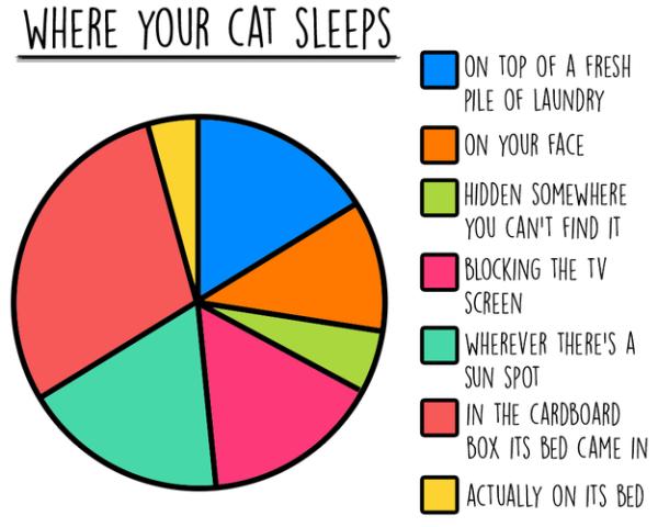 Alex Finnis / BuzzFeed statistiken über das leben mit katzen