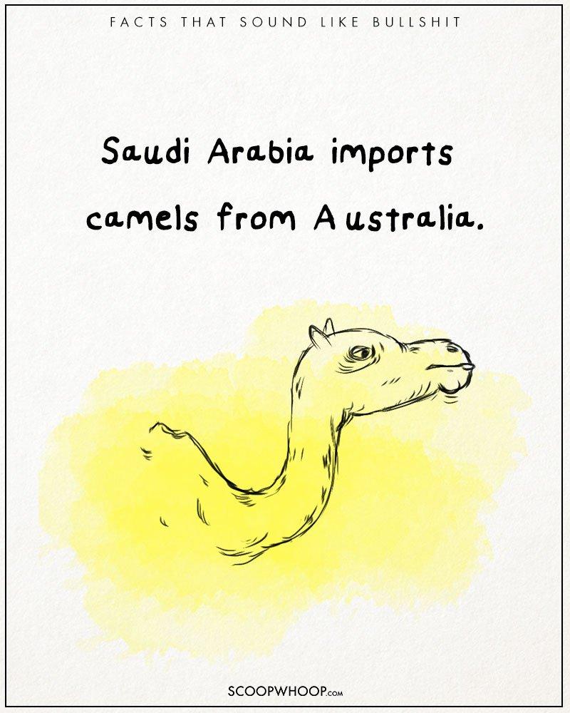 australien saudi arabien kamele