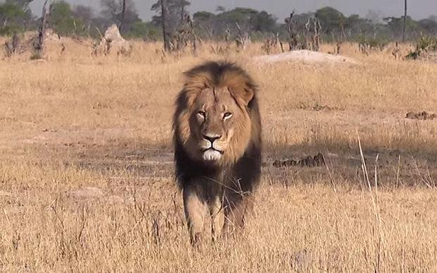 cecil löwe simbabwe
