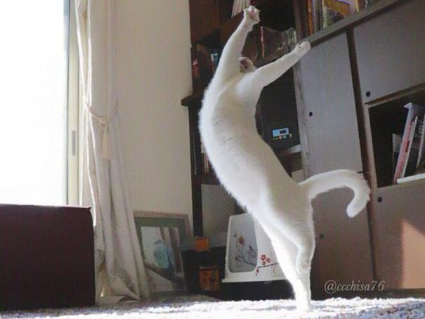 tanzende Katzen