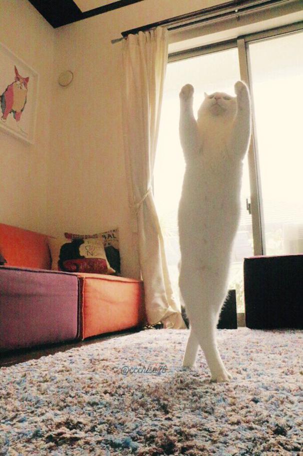 tanzende Haustiere lustig
