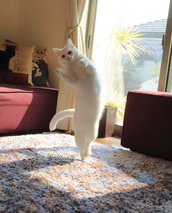 tanzende Katzen in Bewegung lustig