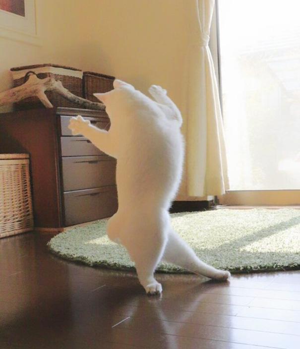 Japan Katze tanzt Ballett