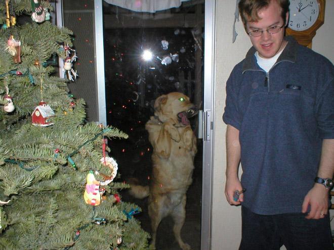 Hunde lecken Fensterscheiben