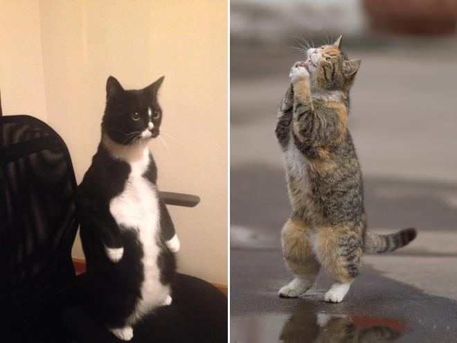 lustige dinge, die katzen machen