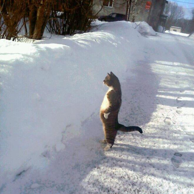 katze steht im schnee