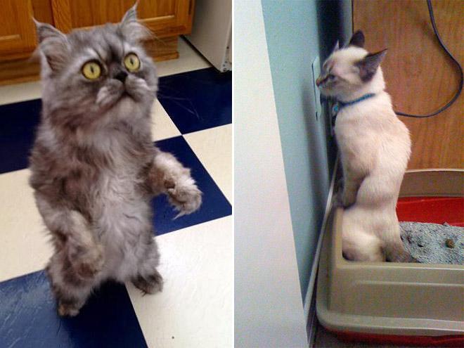 katzen, die stehen