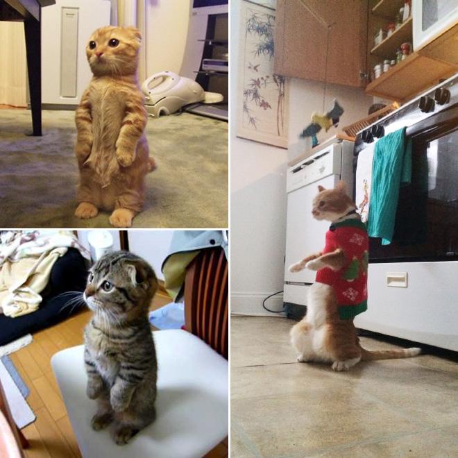 stehende katzen lustig
