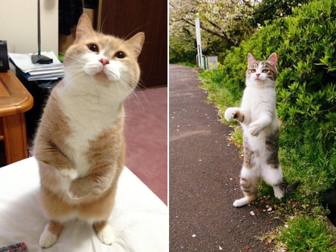 stehende katzen lustige bilder