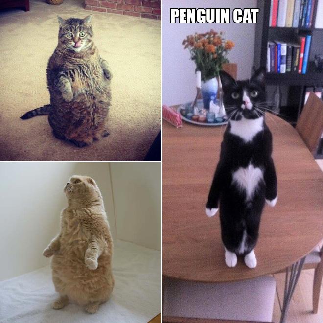 stehende katzen