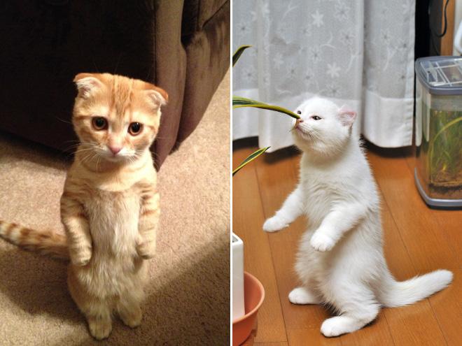 lustige bilder mit katzen