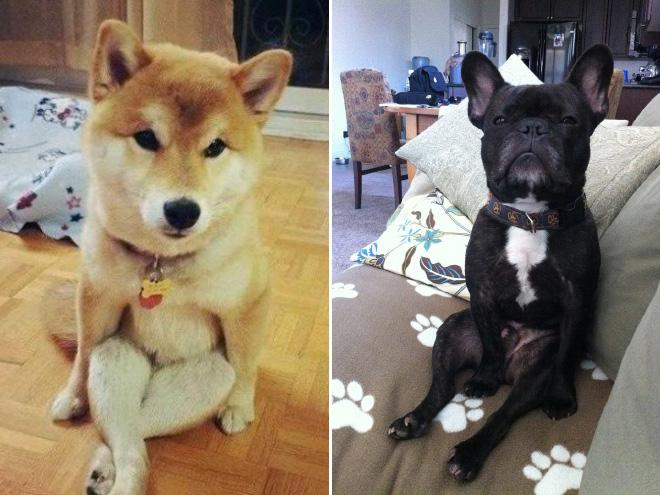 sitzende Hunde 5 schwarz