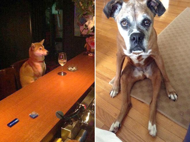 sitzende Hunde wein trinken