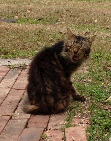 lustige katzenbilder niesende katzen