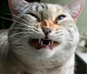 katzen, die niesen cat sneezes tumblr