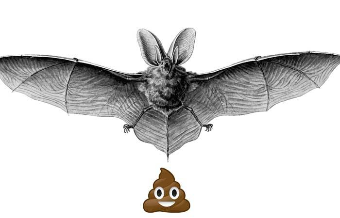giant bat farts lustigste seiten im internet ohne sinn