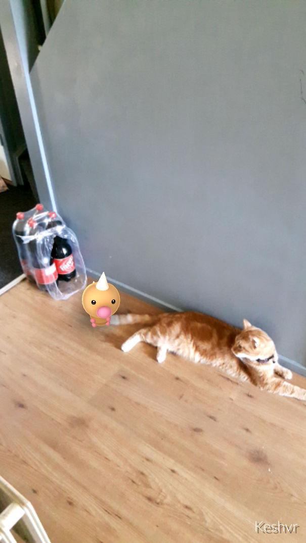 können katzen pokémon sehen? beweis