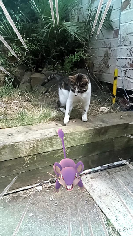Katzen jagen Pokémon lustig App
