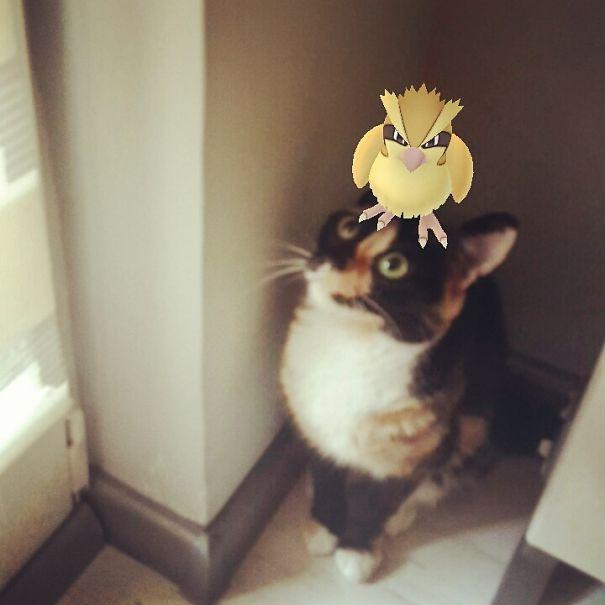 Taubsi auf Katze lustiges Bild Pokémon