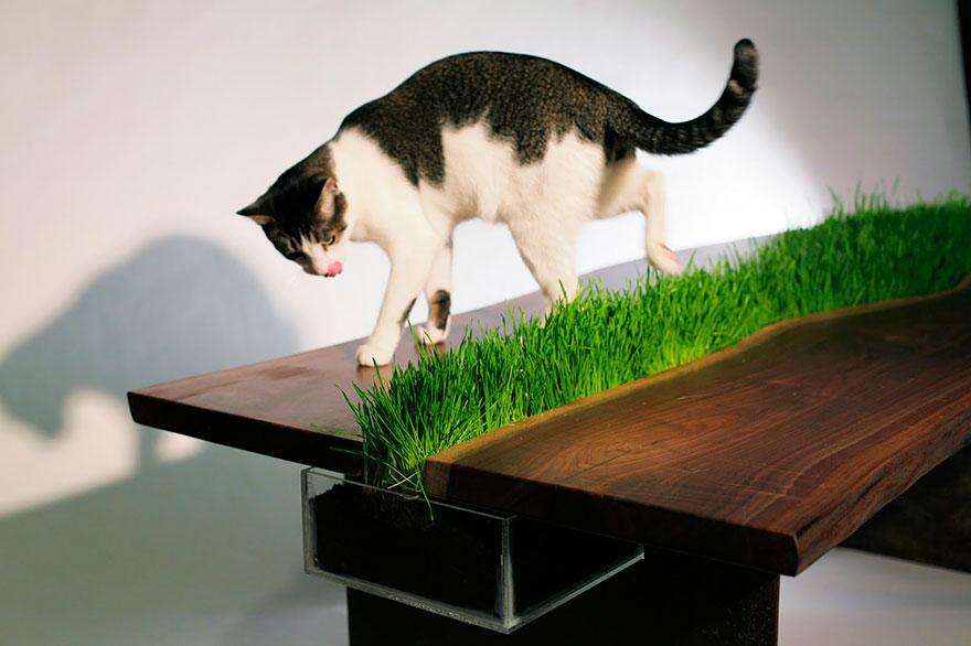 Katzen_Möbel_21 grastisch katze