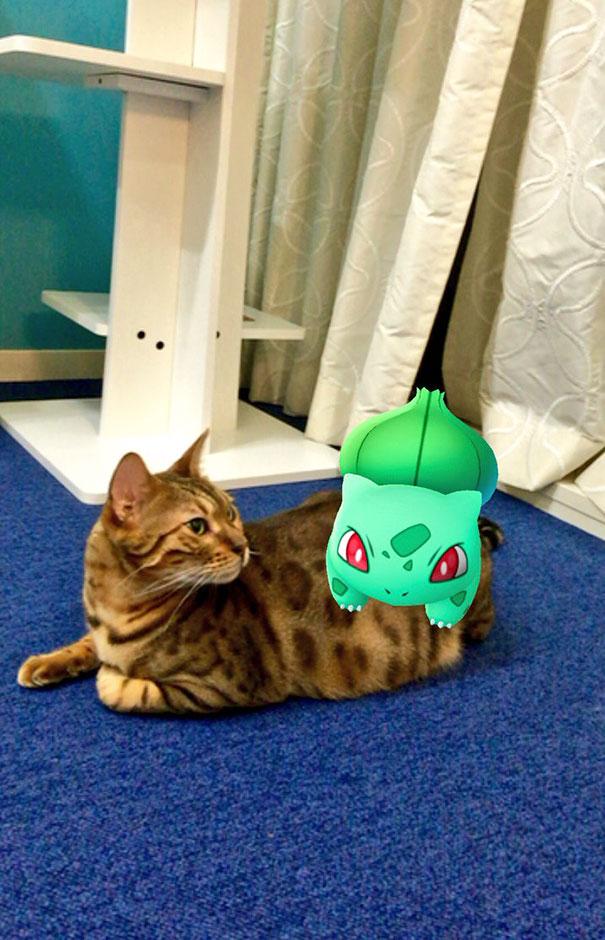 mit echten katzen pokémon spielen