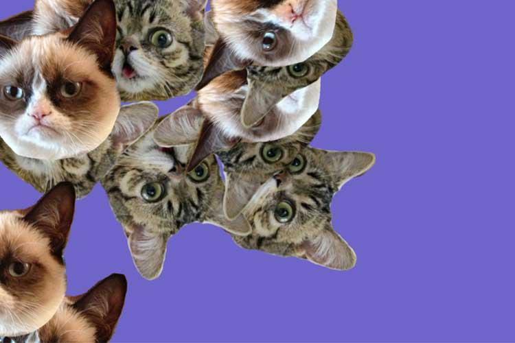 bring in the cats lustige dinge mit katzen internet