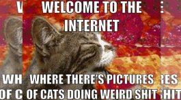 die besten sinnlosen websites mit katzen