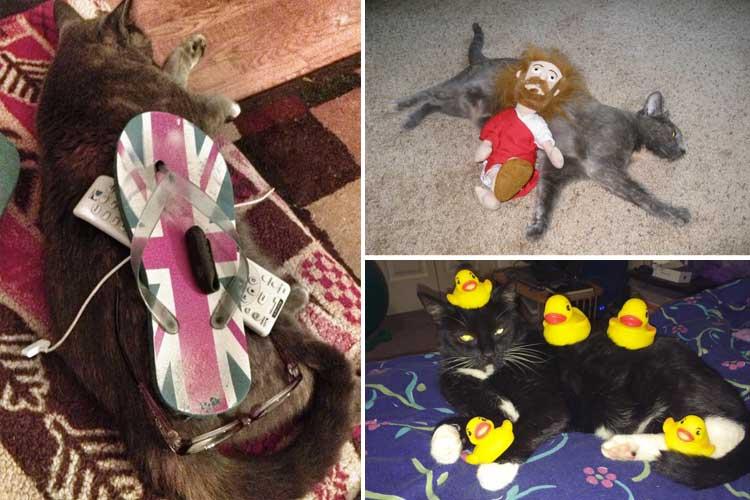 stuff on my cat links mit katzen spielen