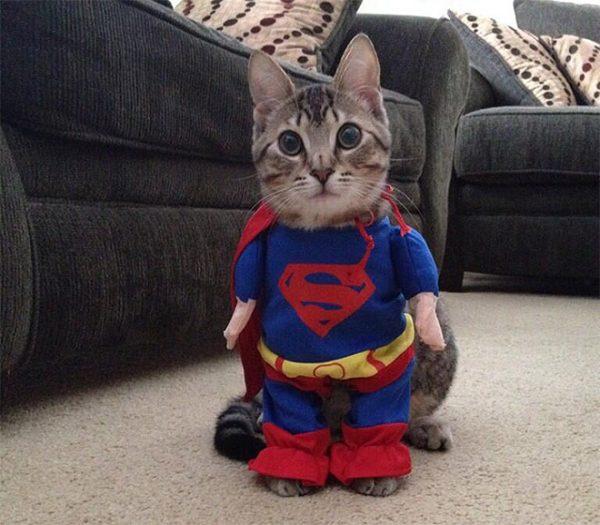 cat-halloween3