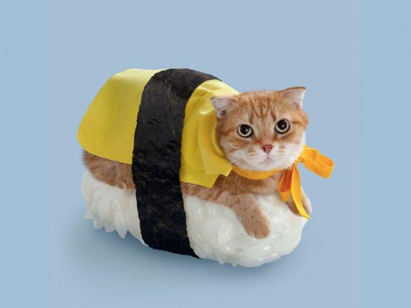 cat-halloween7