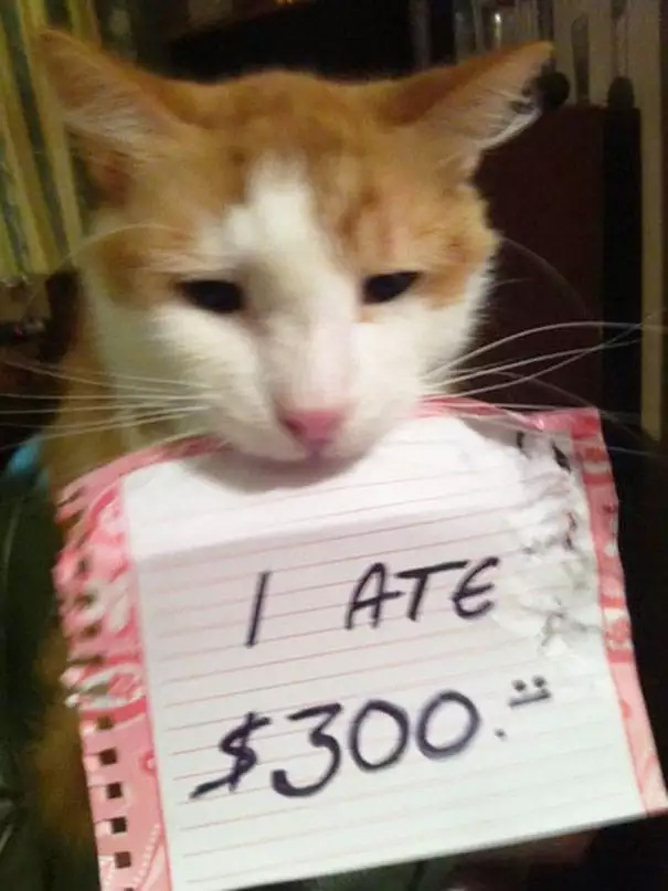 catshaming10