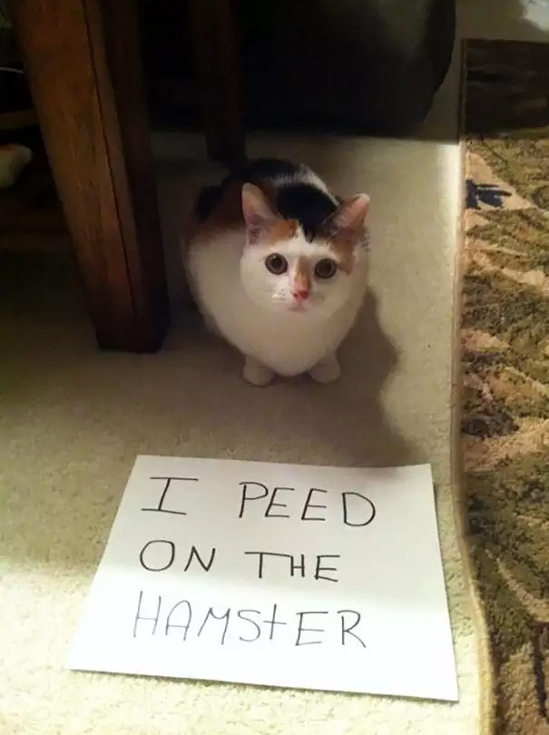 catshaming7