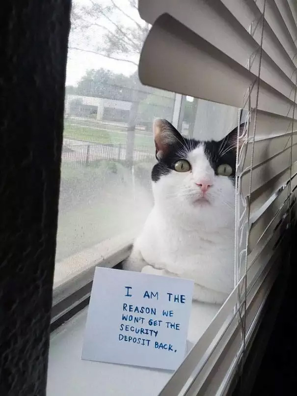 catshaming9