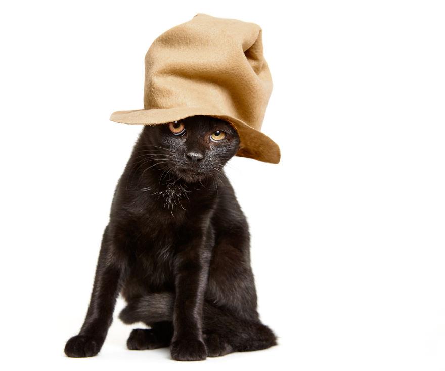 Hüte für Tierheimkatzen