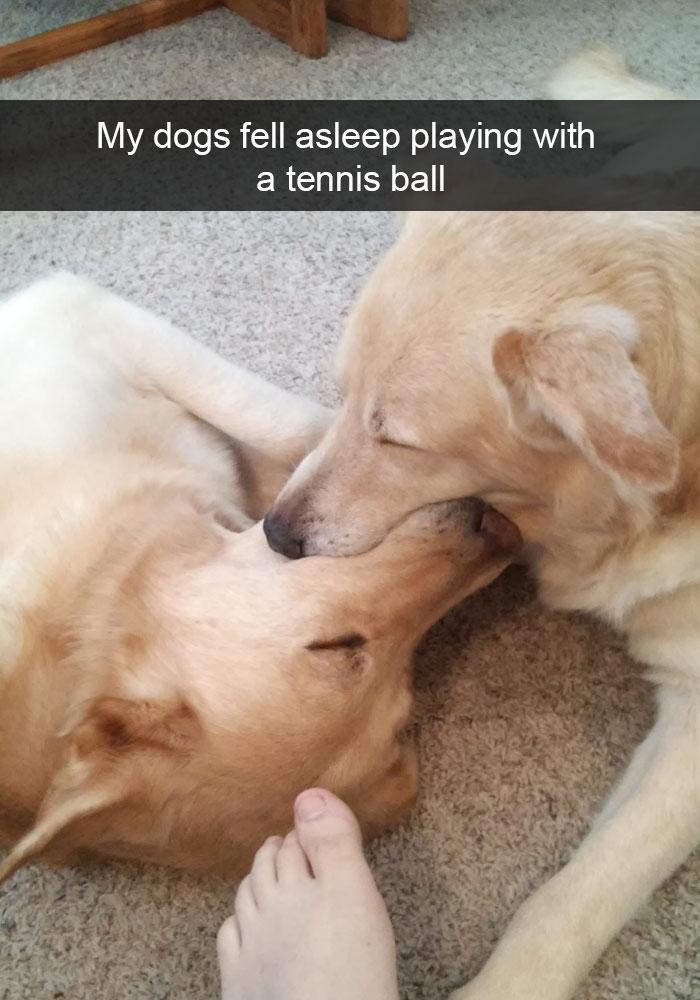 funny-dog-snapchats-1-581ae565735c7__700