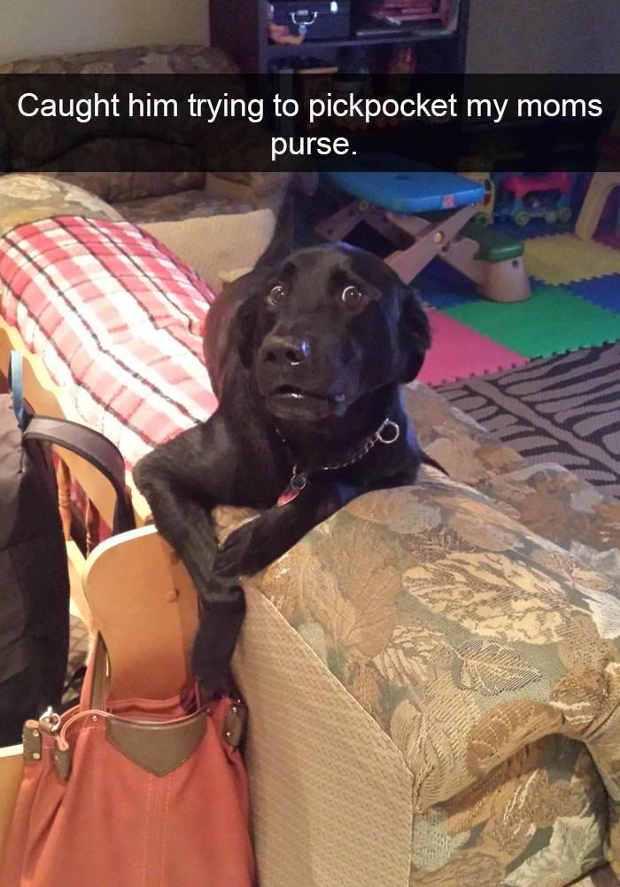 funny-dog-snapchats-113-581b46184f120__700