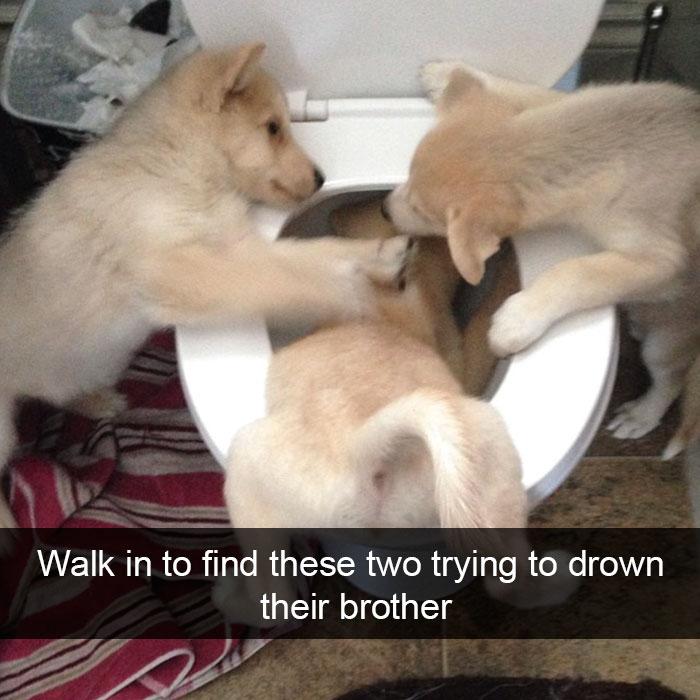 funny-dog-snapchats-4-581ae56f68c93__700