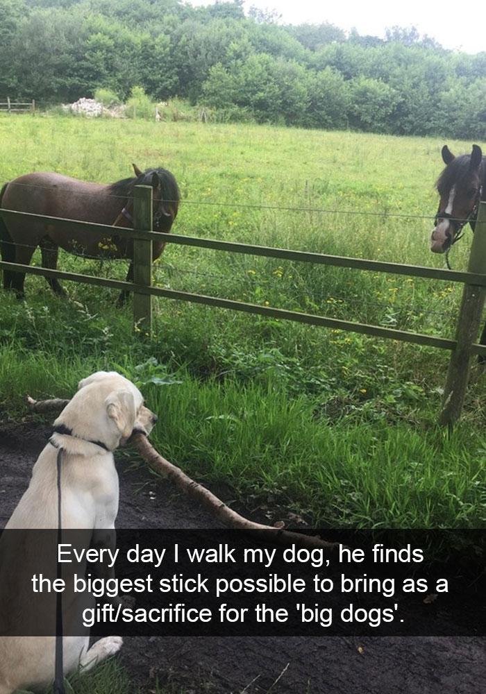 funny-dog-snapchats-62-581af7c2d09e4__700