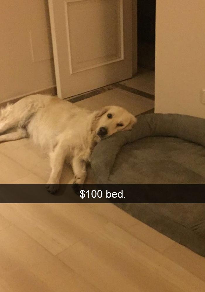 funny-dog-snapchats-64-581af7fea7b87__700